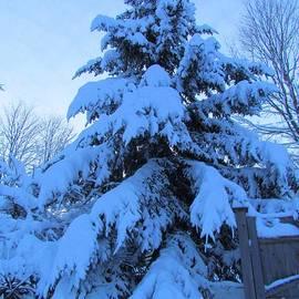 Elizabeth Dow - Blue Snow