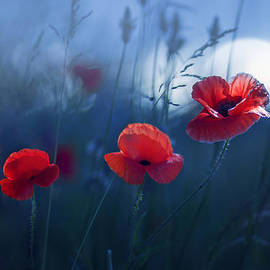 Magda  Bognar - Blue Summer
