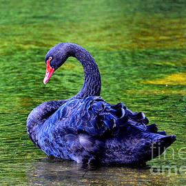 Luminita Suse - Blue Swan