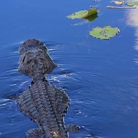 Chuck  Hicks - Blue Water Gator