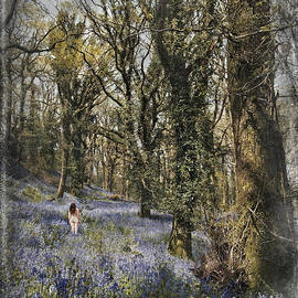 Curtis Radclyffe - Bluebell Forest in Spring 1