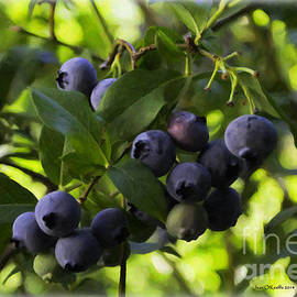 Jean OKeeffe Macro Abundance Art - Blueberries