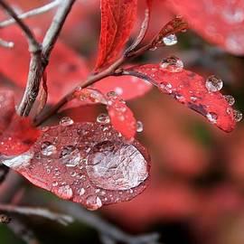 David Broome - Blueberry Rain Drops