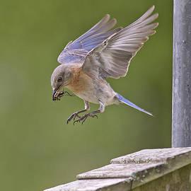 Bonnie Barry - Bluebird Landing