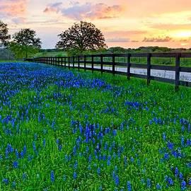 Silvio Ligutti - Bluebonnet Fields Forever Brenham Texas