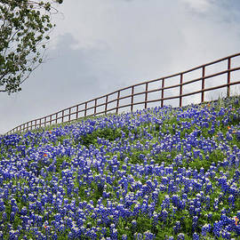 David and Carol Kelly - Bluebonnet Horizon