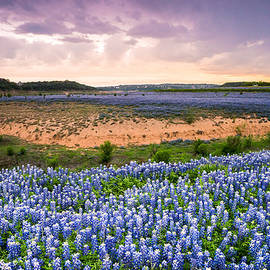 Ellie Teramoto - Bluebonnets on the Colorado River Bank - wildflower field in Texas