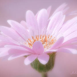 Julie Palencia - Blushing Pink
