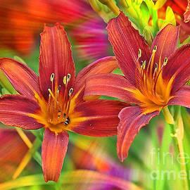 Carol Groenen - Bold and Beautiful Daylilies
