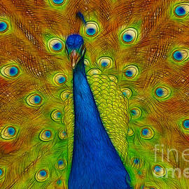 Darleen Stry - Bold Bright Peacock