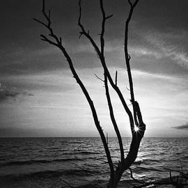 Bradley R Youngberg - Bonita Beach Tree Black And White