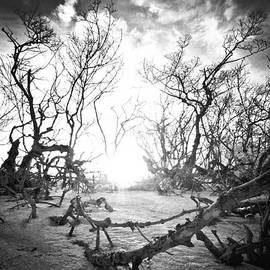 Bradley R Youngberg - Bonita Beach Walkway