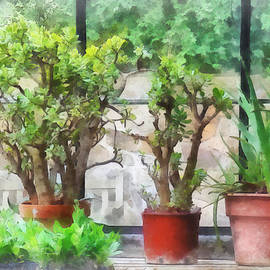 Susan Savad - Bonsai in Greenhouse
