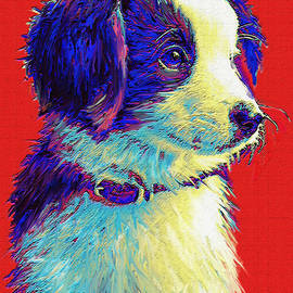 Jane Schnetlage - Border Collie Puppy