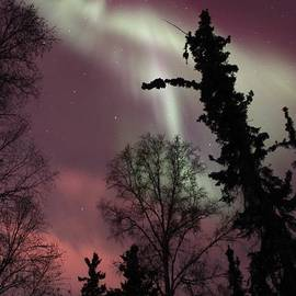 David Broome - Boreal Forest Aurora
