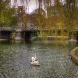 Joann Vitali - Boston Public Garden Swans