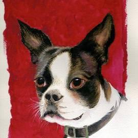 Nan Wright - Boston Terrier Dog