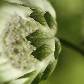 Connie Handscomb - Botanica .. Wind