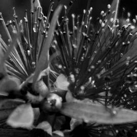 Laurie Pike - Bottle Brush Petals