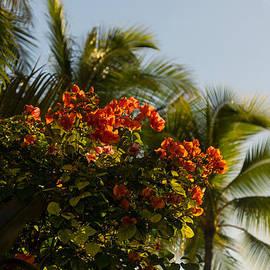 Georgia Mizuleva - Bougainvilleas and Palm Trees Swaying in the Wind in Waikiki Honolulu Hawaii