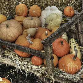 Tracy  Hall - Bounty Pumpkins