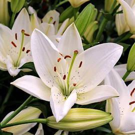 Francie Davis - Bouquet of White Lilies