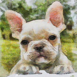 Laurence Canter - Bouvier - French Bulldog