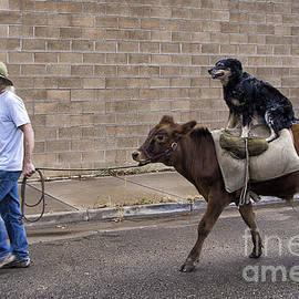 Priscilla Burgers - Bovine Riding Canine