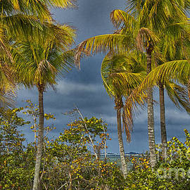 Anne Rodkin - Bowditch Point Palms