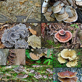 Mother Nature - Bracket Fungi Montage - Shelf or Plate Fungi