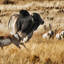 Priscilla Burgers - Brahma Bull Meets the Pronghorn