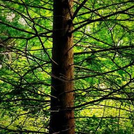 Christy Ricafrente - Branches