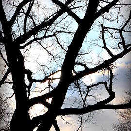 Valentino Visentini - Branches in the Dark
