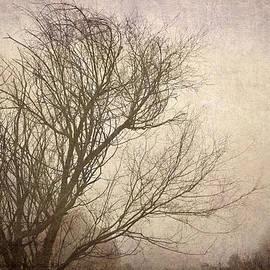 Guido Montanes Castillo - Branches In The Wind