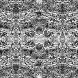 Florin Birjoveanu - Branches Pattern