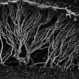 Robert Woodward - Branches
