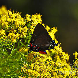 Al Powell Photography USA - Breathtaking Butterfly