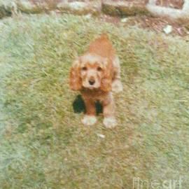 Julie Dunkley - Brians dog