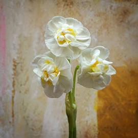 Lutz Baar - Bridal Crown Narcissus Square