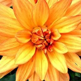 CJ Anderson - Bright and Beautiful