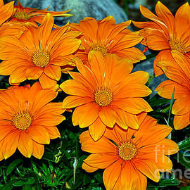 Kaye Menner - Bright Orange Daisy Garden by Kaye Menner