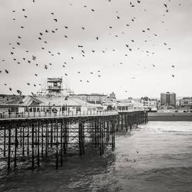 Benjamin Hardman - Brighton Pier. So Many Birds!