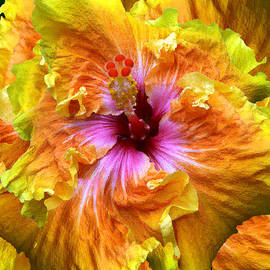 Michele  Avanti - Brilliant Hibiscus