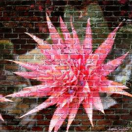 Leanne Seymour - Bromeliad On The Wall