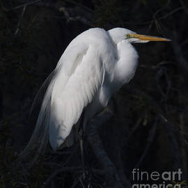 Dale Powell - Brooding Heron