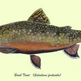 Ted Reeves - Brook Trout