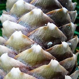 Karin Ravasio - Brown and white fir cone pattern