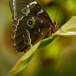 Jaroslaw Blaminsky - Brown butterfly resting on the leaf