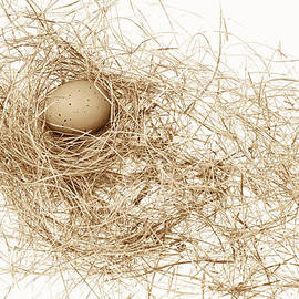 Jennie Marie Schell - Brown Egg in Bird Nest Sepia