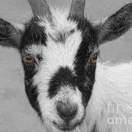 Jayne Carney - Brown Eyed Goat